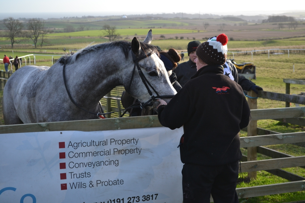 The grey mare Silver Carousel after finishing 4th in the Open Maiden (Div 1) 456&7yo race