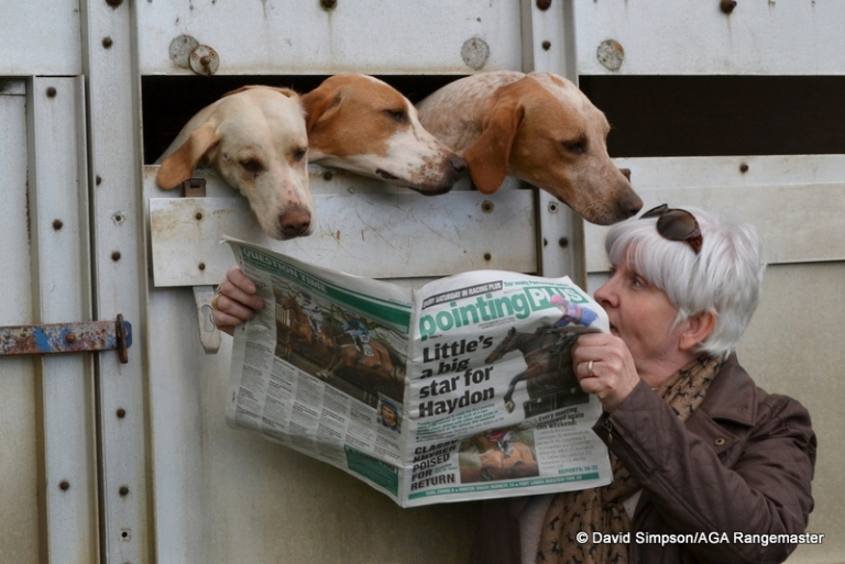 The hounds have a browse through Pointing Plus with Mrs S