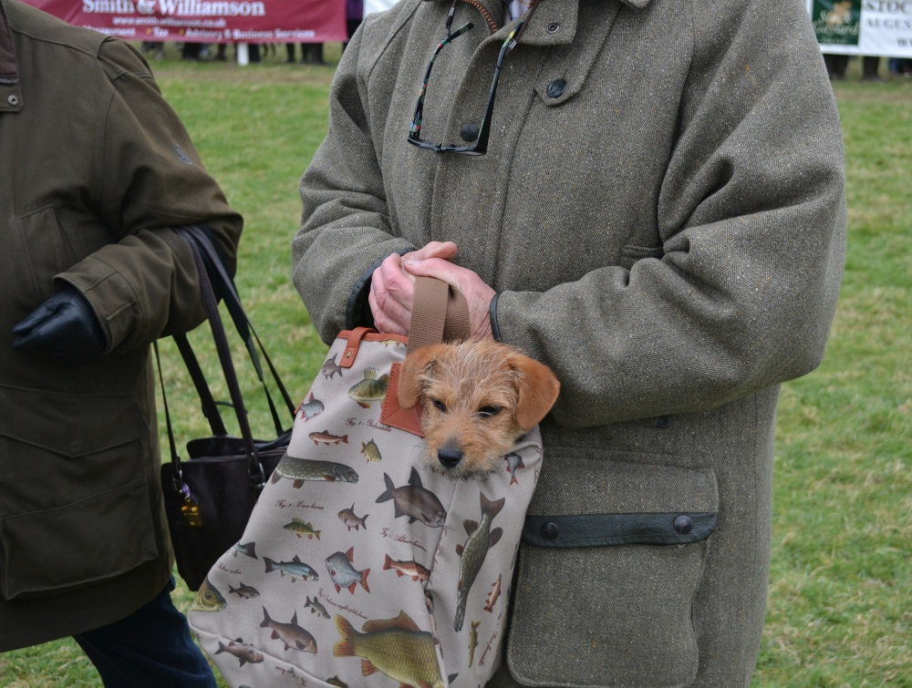 Has anyone seen a dog in the paddock?