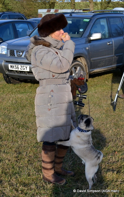 Arnie (the original AGA point-to-point dog), really wants to try a Mincemeat Muffin - as featured in the first ever 'Picnic Pointers', which debuted in Go Pointing